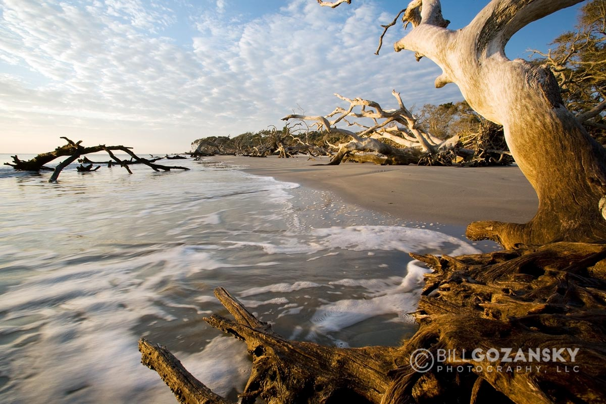 Driftwood Beach - Jekyll Island, Georgia, USA