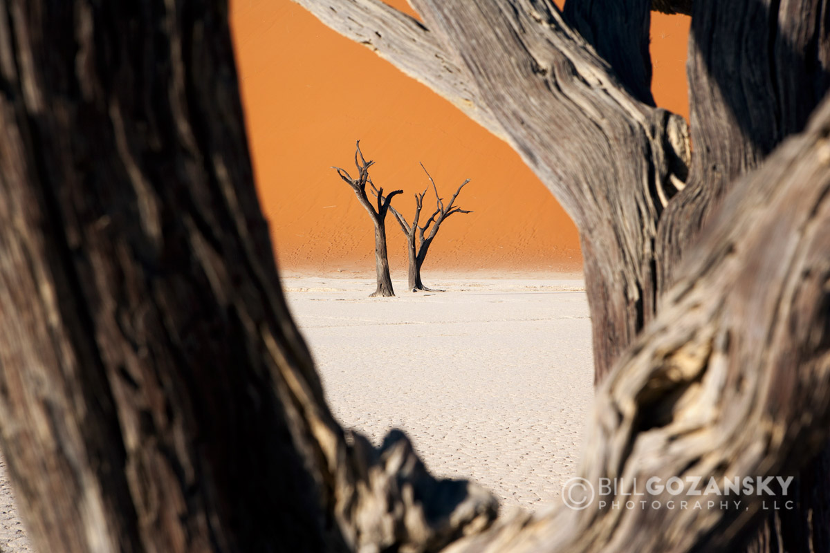 Dead Vlei in Sossusvlei National Park - Namib-Naukluft National Park, Namibia, Africa