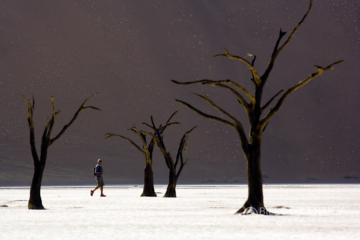 Deadvlei - Sossusvlei National Park - Namib-Naukluft National Park, Namibia, Africa
