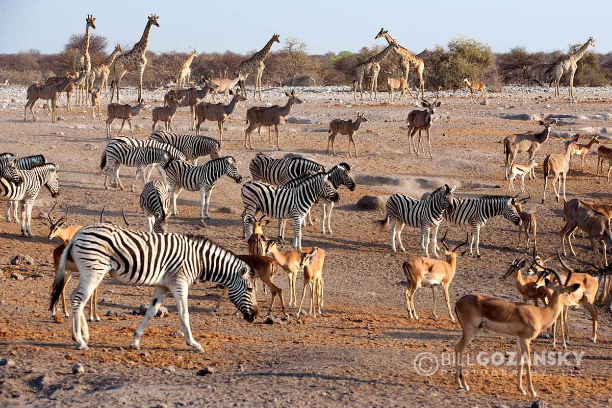 Animals congregating at Chudop Waterhole - Etosha National Park - Namibia, Africa