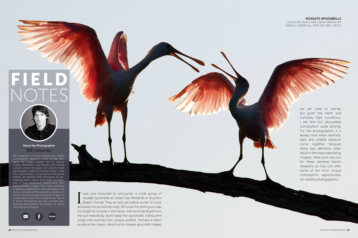 Wildlife Photographic Issue 21: Field Notes