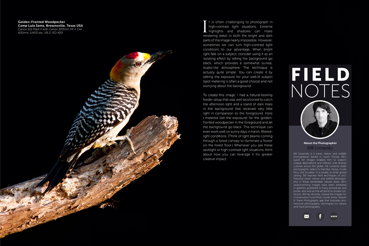 Wildlife Photographic Issue 22: Field Notes