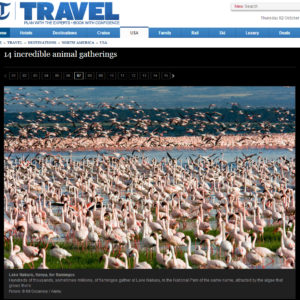 The Telegraph - Lake Nakuru Flamingos