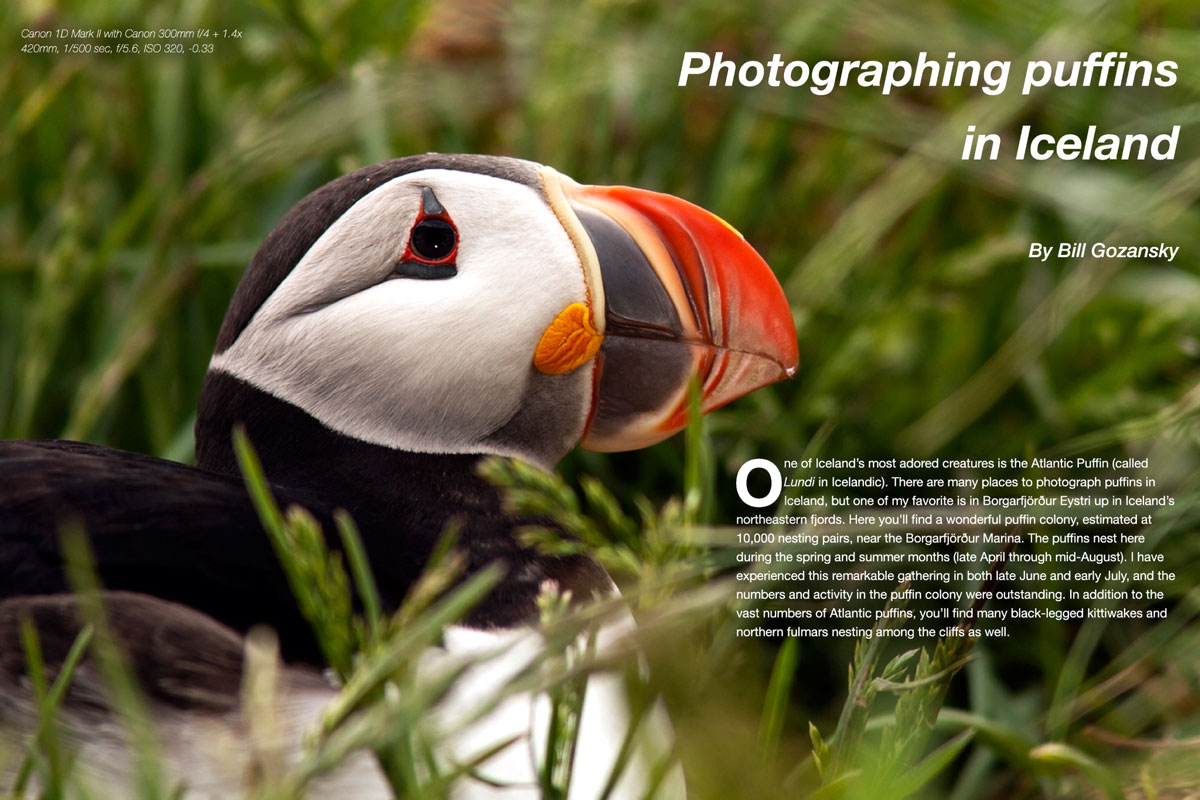 Wildlife Photographic Issue 12