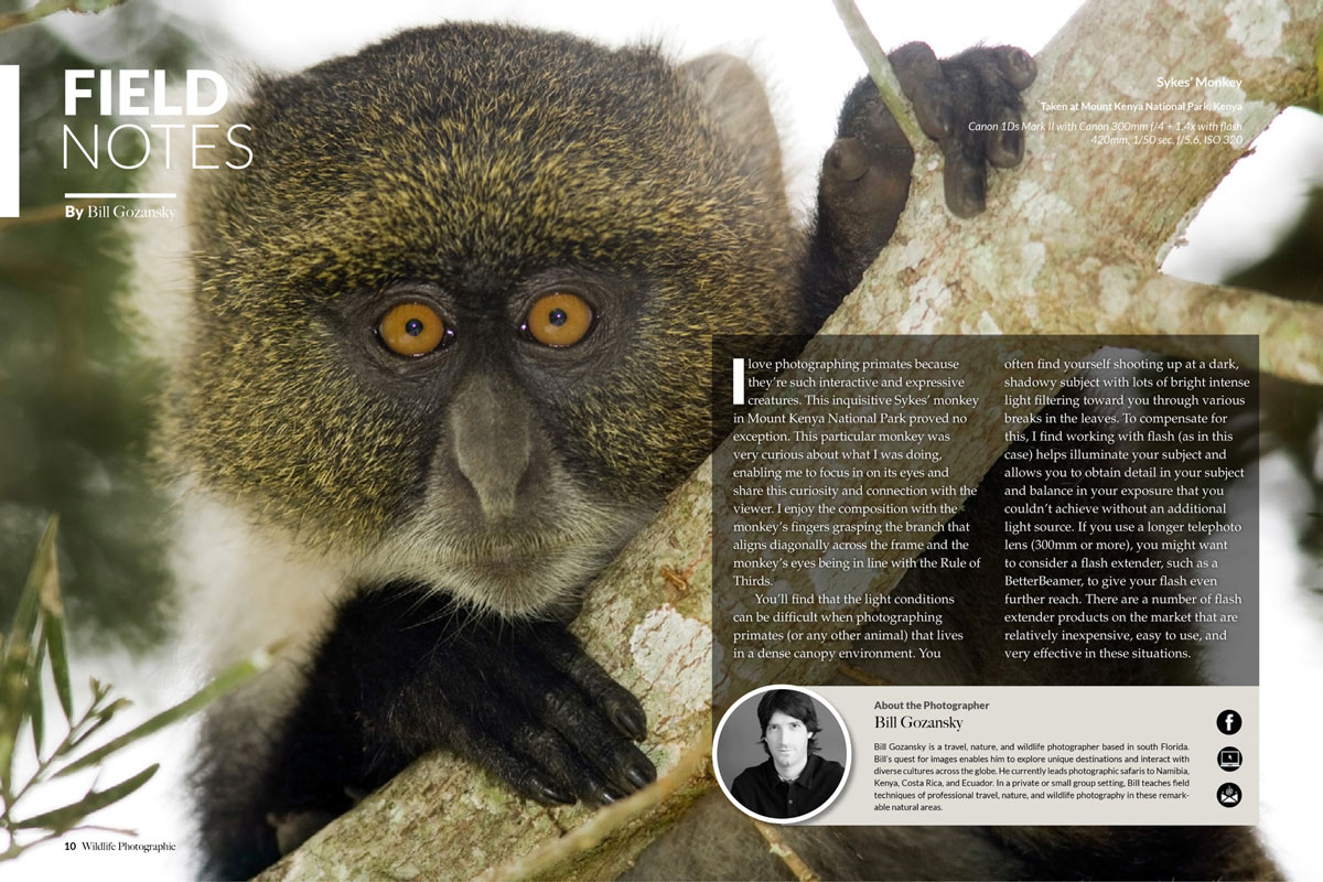 Wildlife Photographic Issue 14