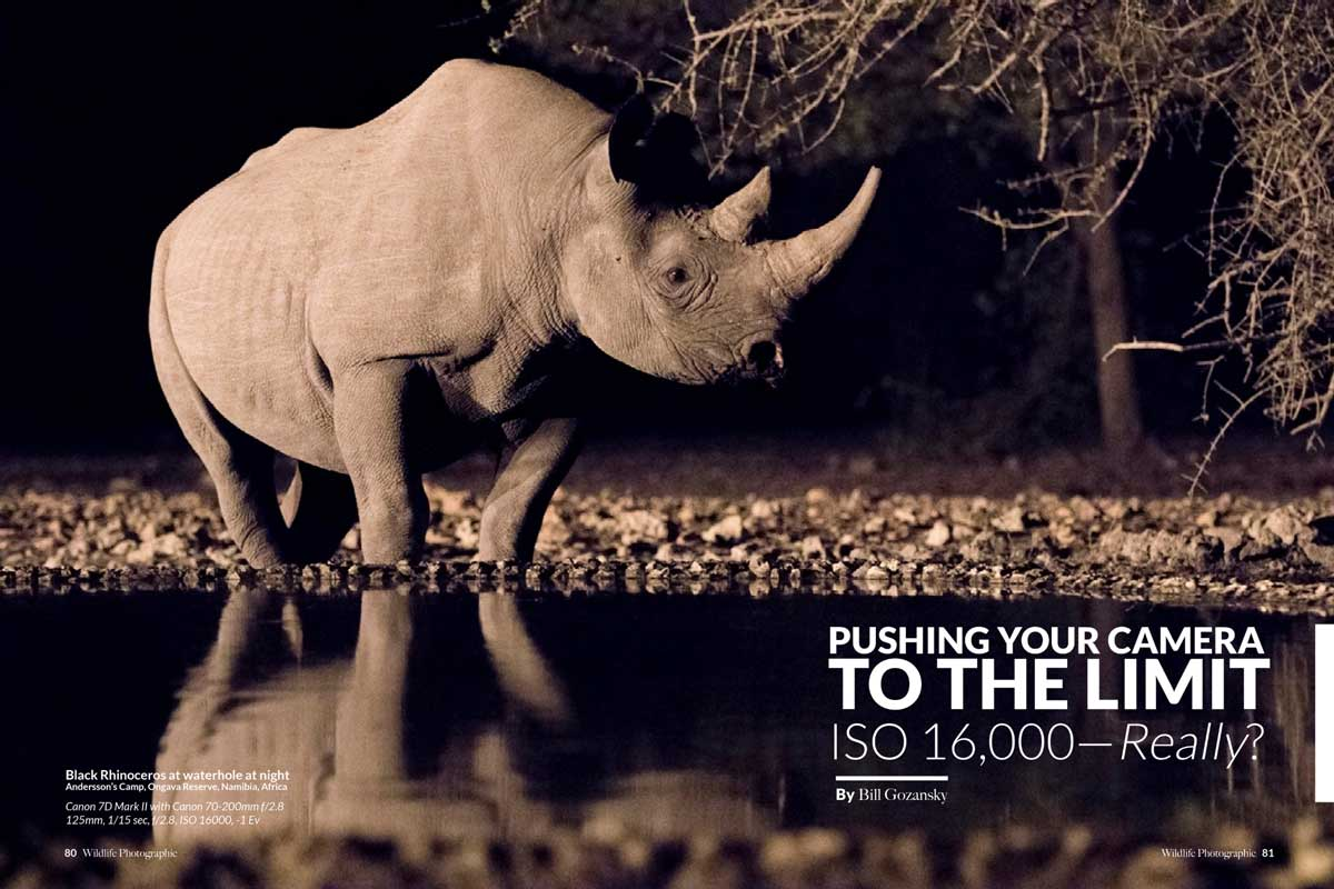 Wildlife Photographic Issue 16
