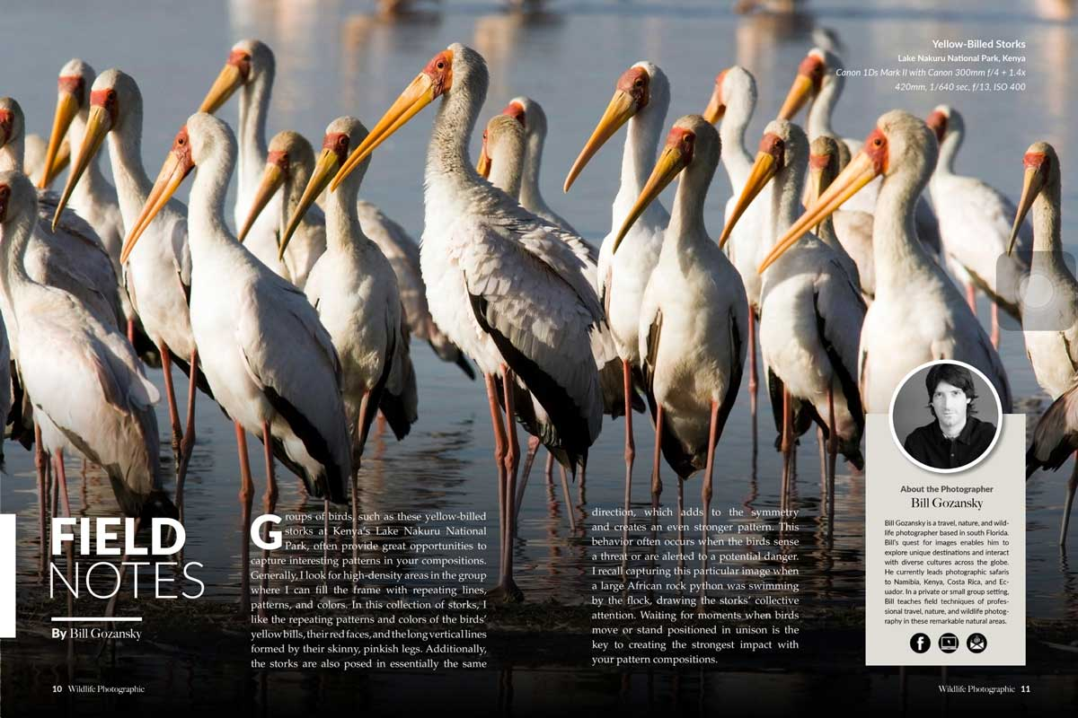 Wildlife Photographic Issue 18
