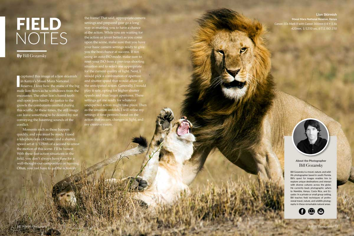 Wildlife Photographic Issue 19