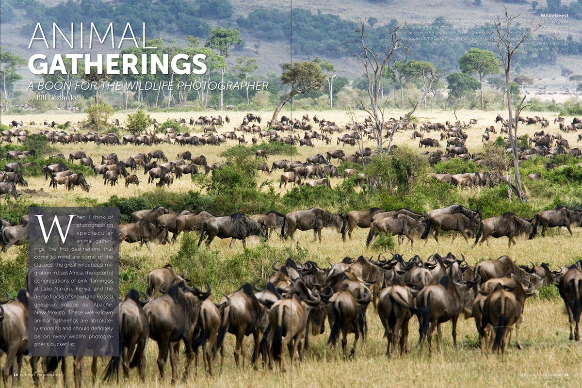 Wildlife Photographic Issue 26