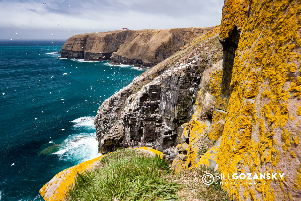 Cape St. Mary's Ecological Reserve, Cape St. Mary's, Avalon Peninsula, Newfoundland, Canada